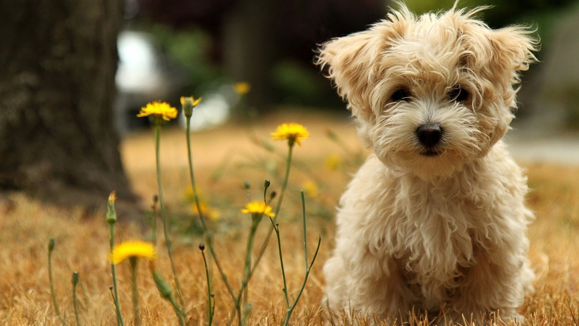 cute animal wallpapers for