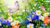 Colorful Flower Backgrounds (58+ images)