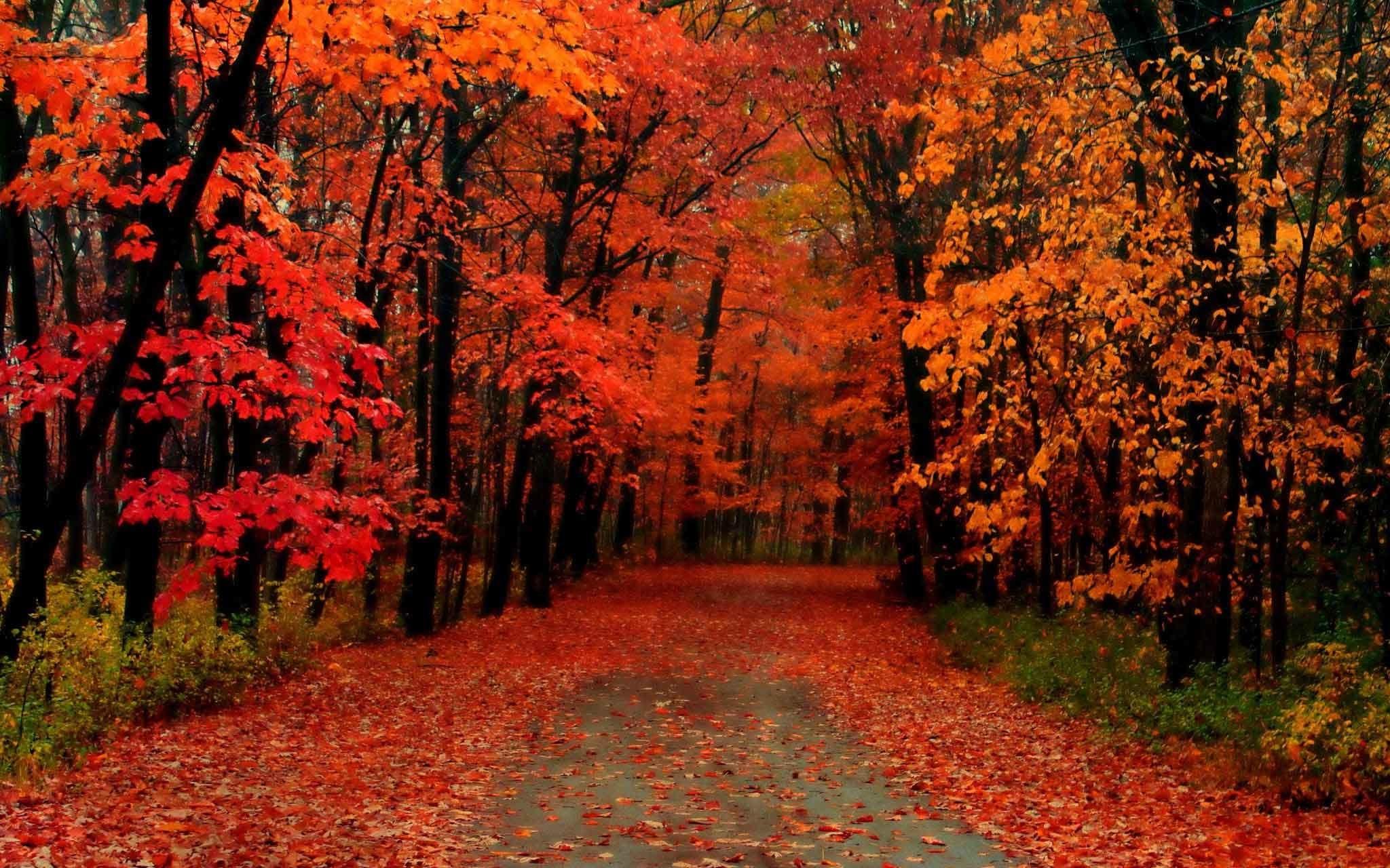 New Hampshire Fall Foliage Wallpaper Fall Trees Wallpaper 70 Images