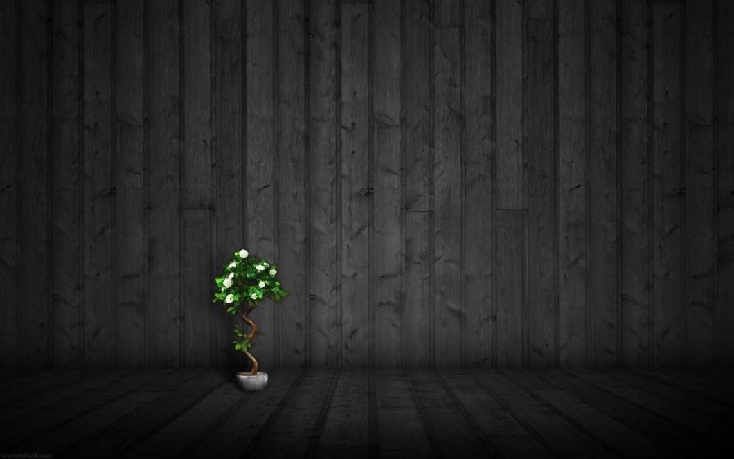 Dark Woods Wallpaper 66 Images