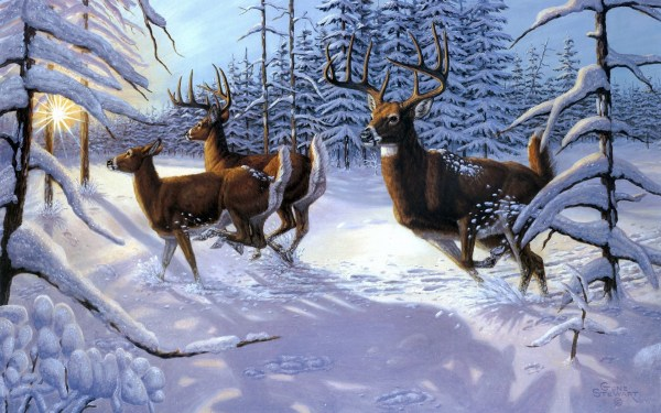 20 Deer Themes For Windows 7 Pictures And Ideas On Meta Networks
