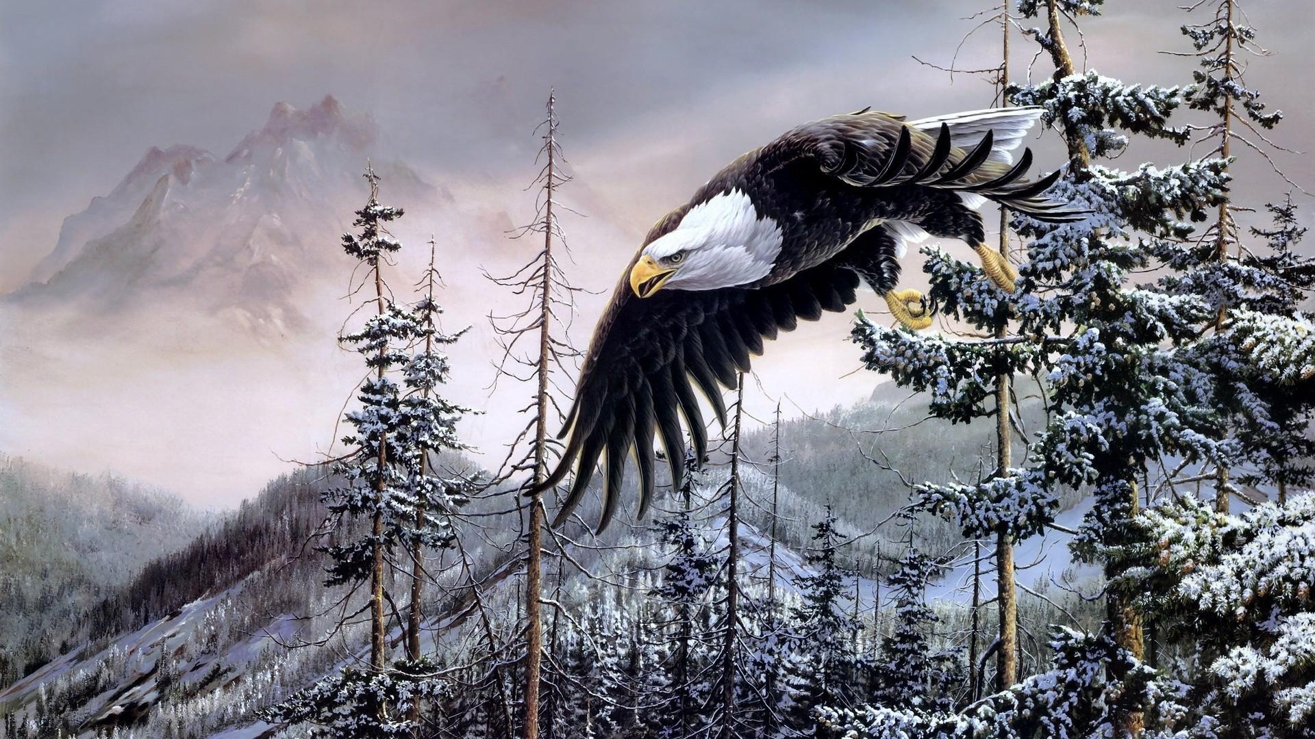 Iphone X Philadelphia Eagles Wallpaper Eagle Wallpaper 81 Images