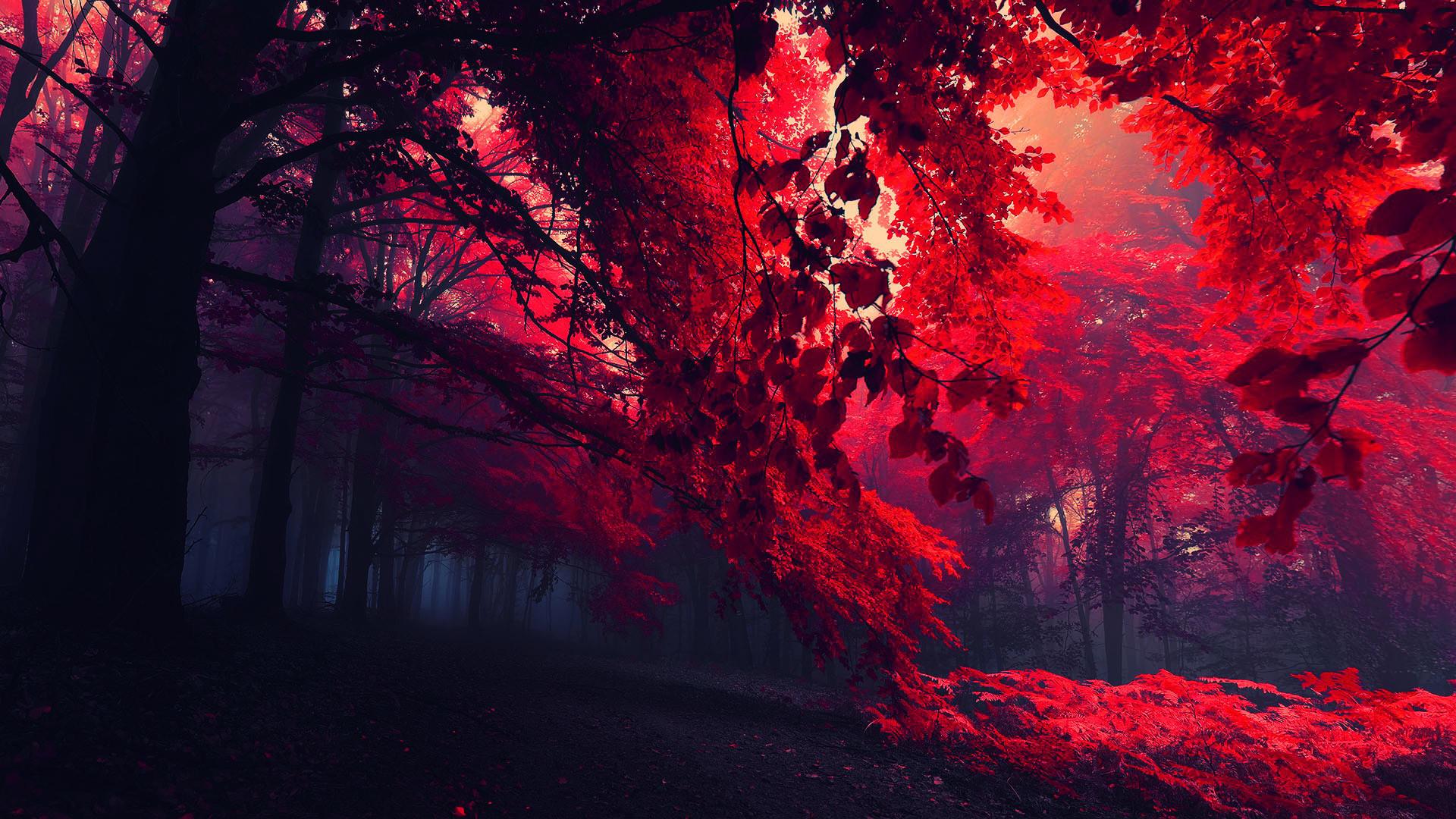 Galaxy S5 Fall Wallpaper Dark Forest Hd Wallpaper 61 Images