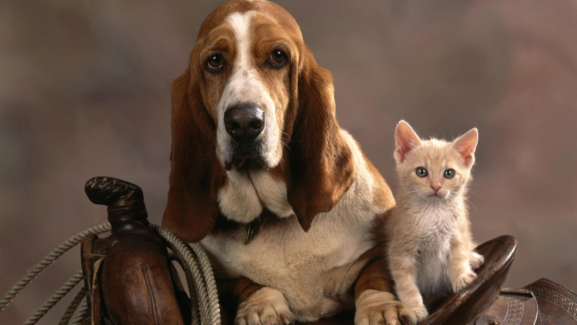 Cats And Dogs Wallpaper 54 Images