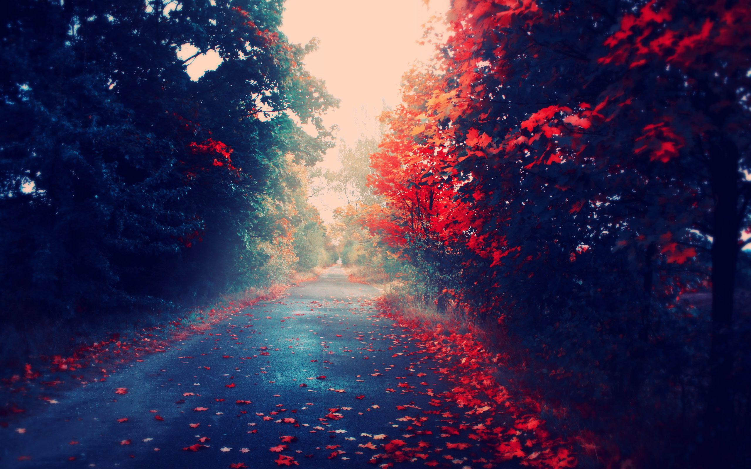 Fall Wallpapers For A Cell Phone Red Nature Wallpaper 65 Images