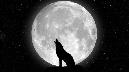 moon wolf night stars hd