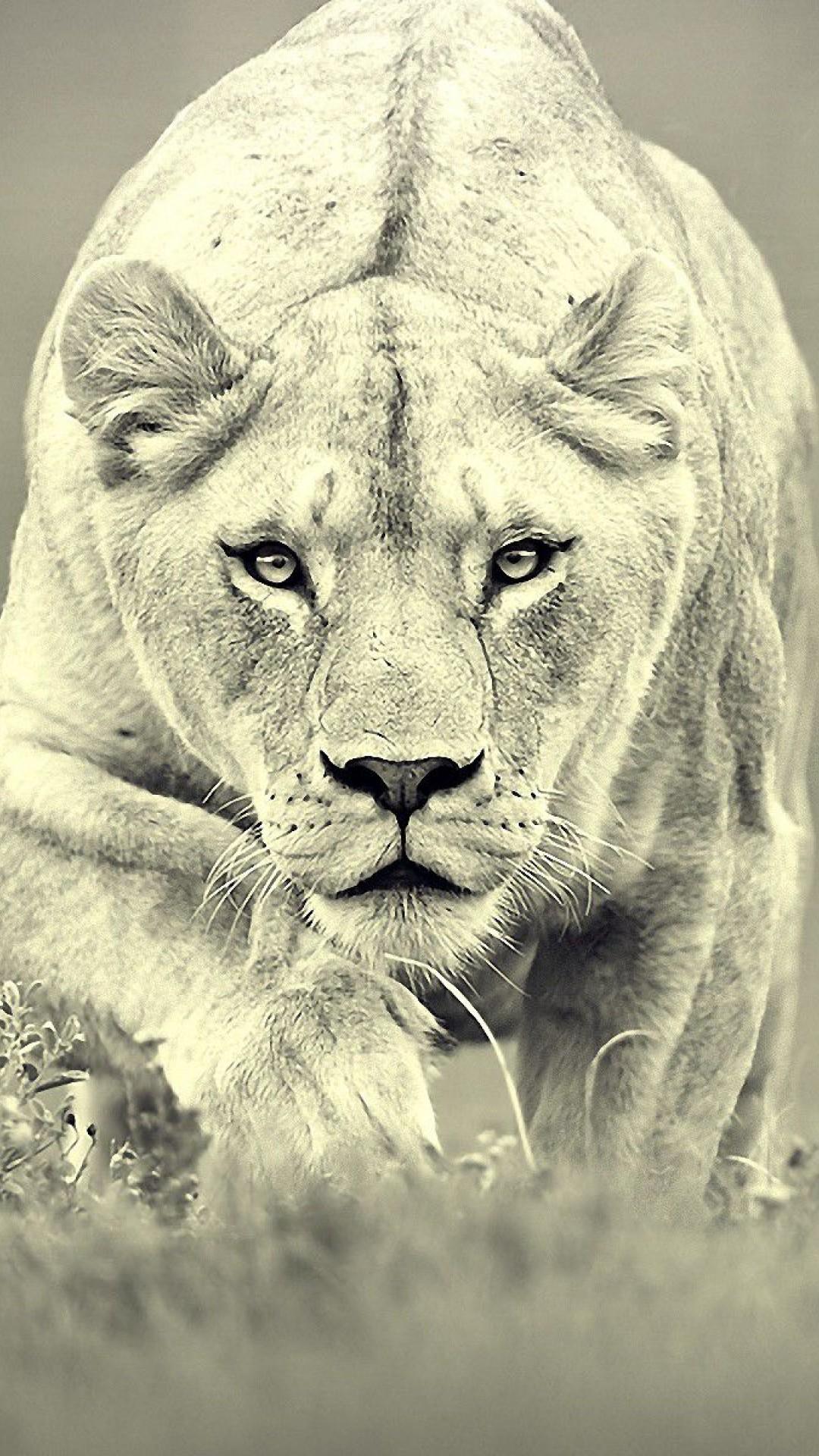 Hipster Lions Desktop Wallpaper