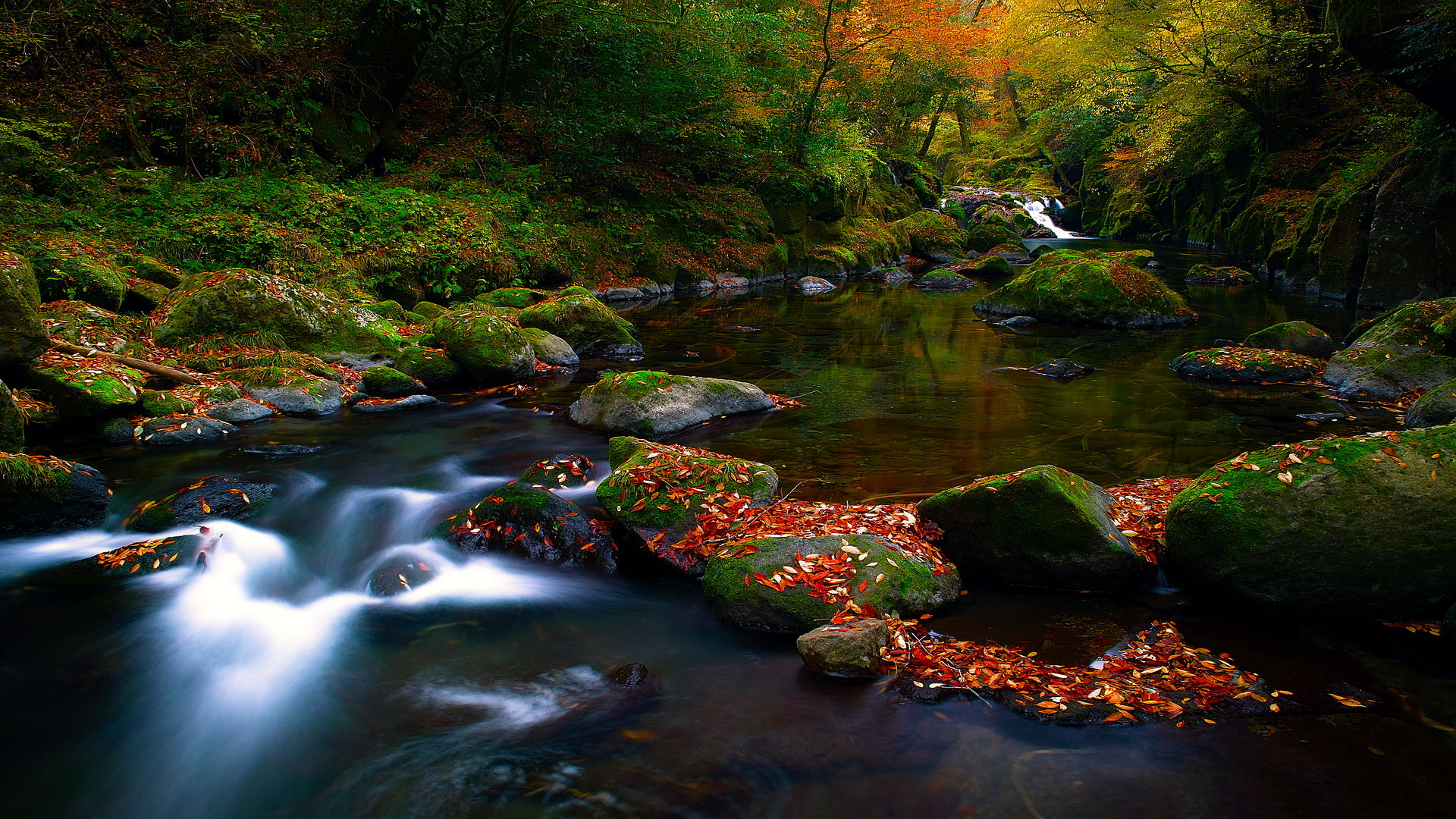 nature screensavers and wallpapers
