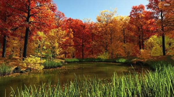 Fall Nature Desktop Wallpaper 1920X1080