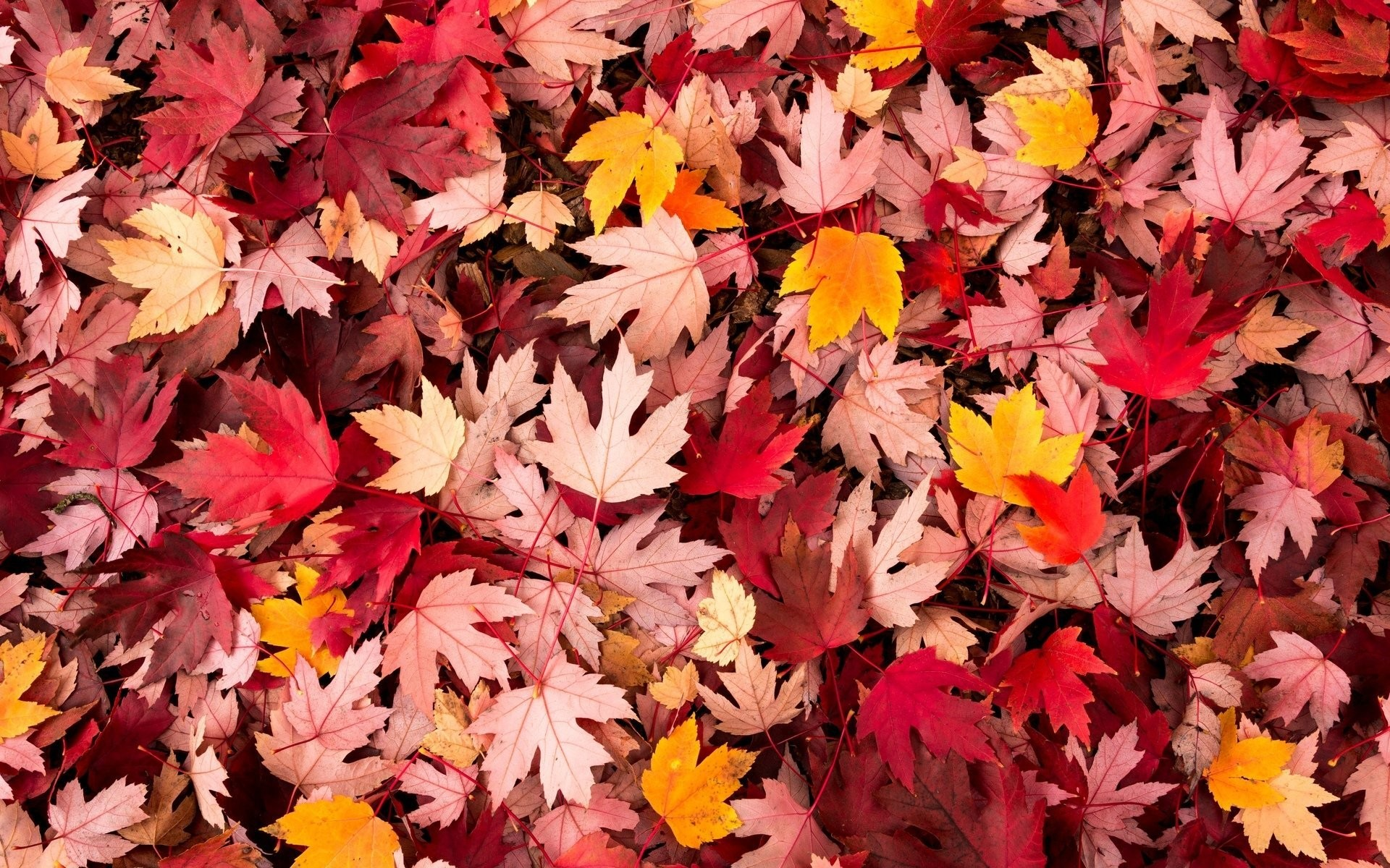 Falling Leaves Live Wallpaper Apps Android Autumn Screen Wallpaper 64 Images