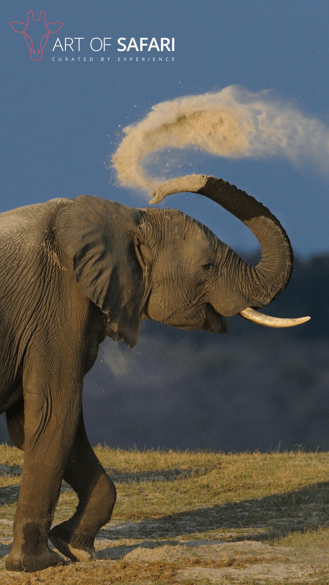 Cute Cartoon Family Wallpaper Elephant Iphone Wallpaper 74 Images