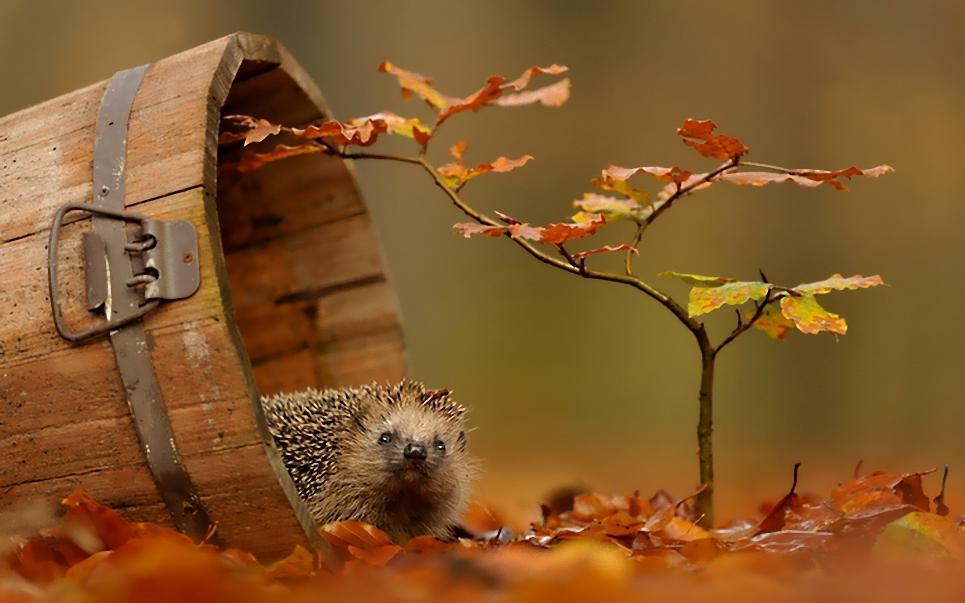 1920x1200 Fall Wallpaper Autumn Animal Wallpaper 65 Images