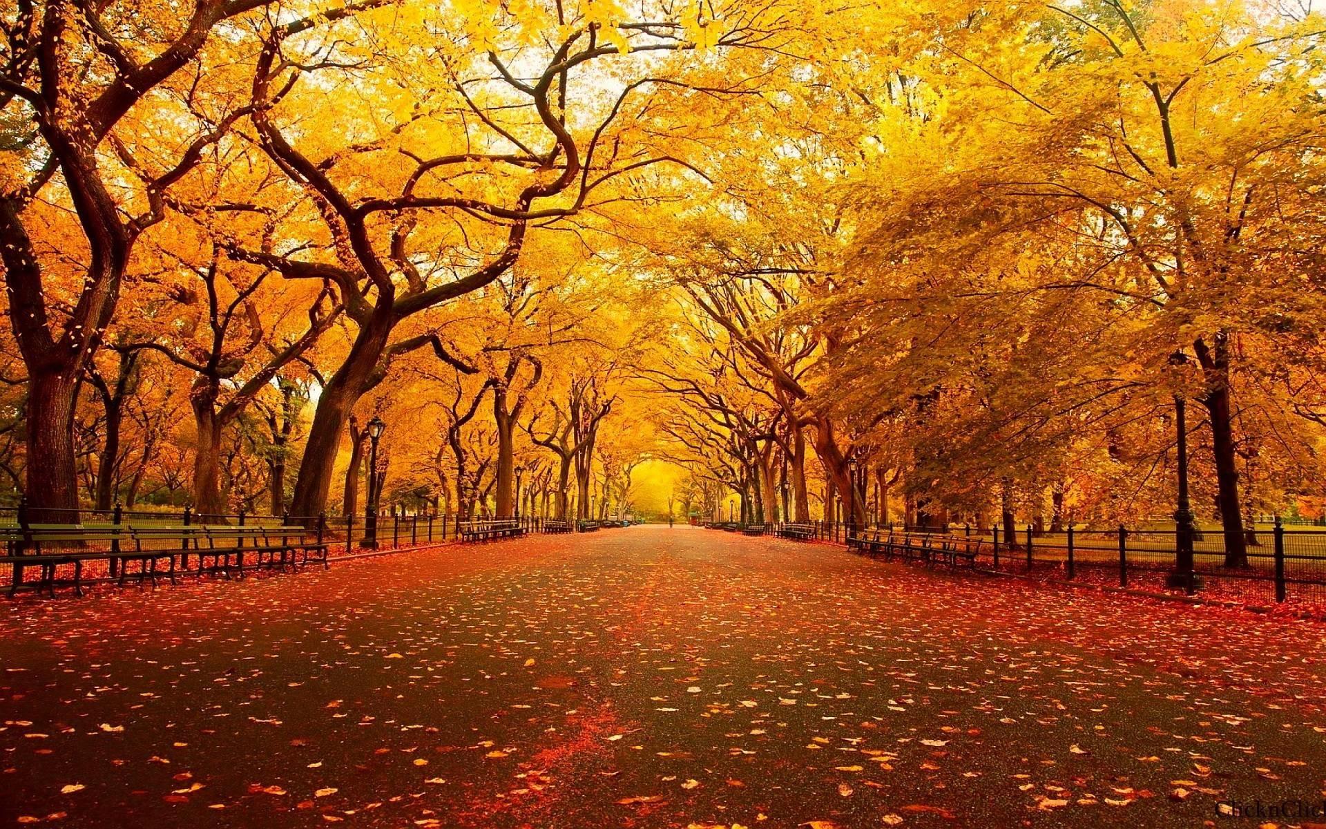 autumn screensavers wallpaper 57