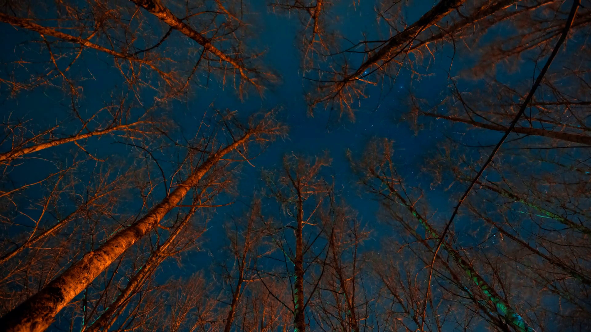 Iphone Optical Illusion Wallpaper Scary Forest Wallpaper 57 Images