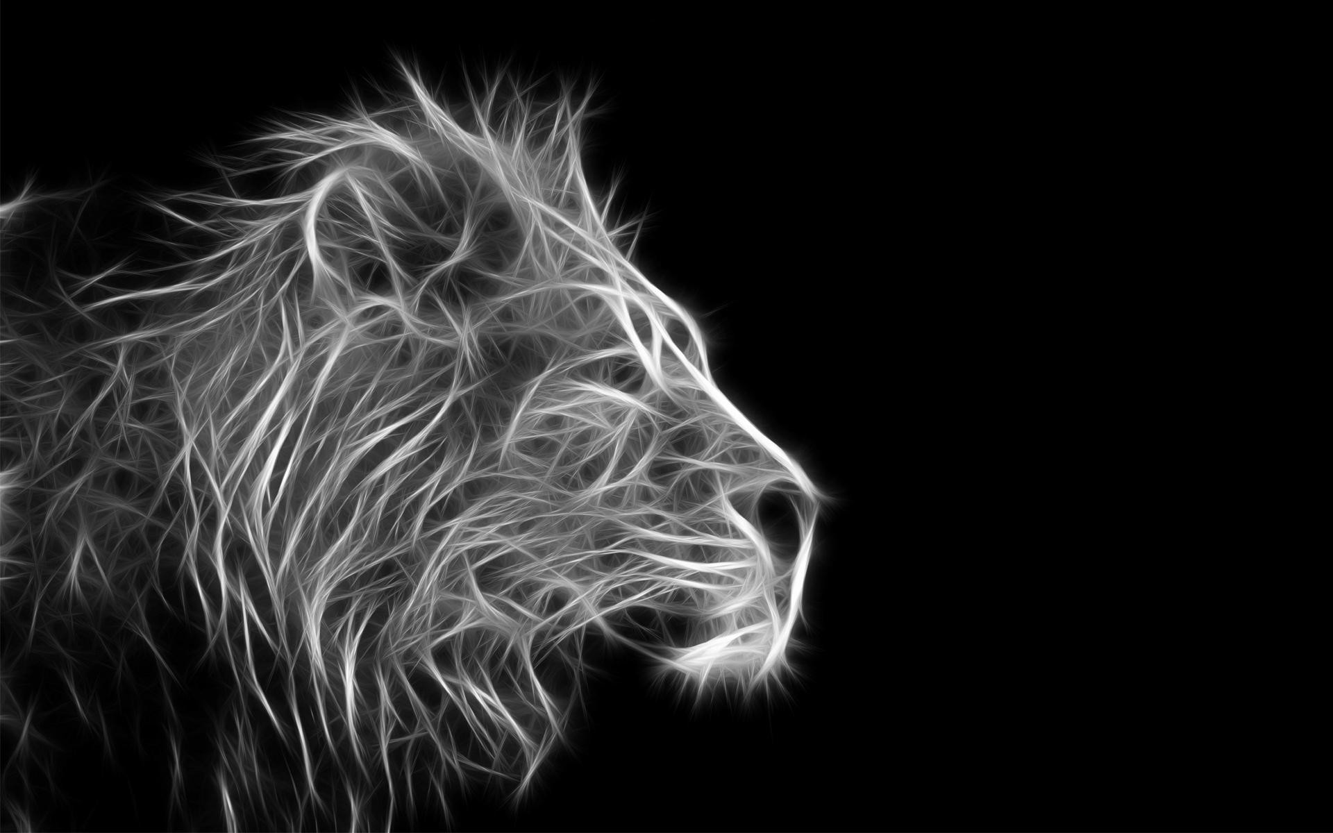 lion wallpaper black and
