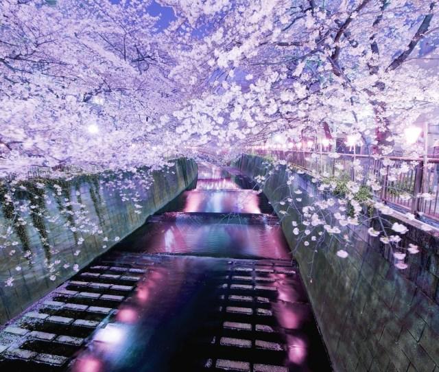 1440x2560 1440x2560 Wallpaper Ryoanji Zen Garden Japan Mirabell Gardens Austria