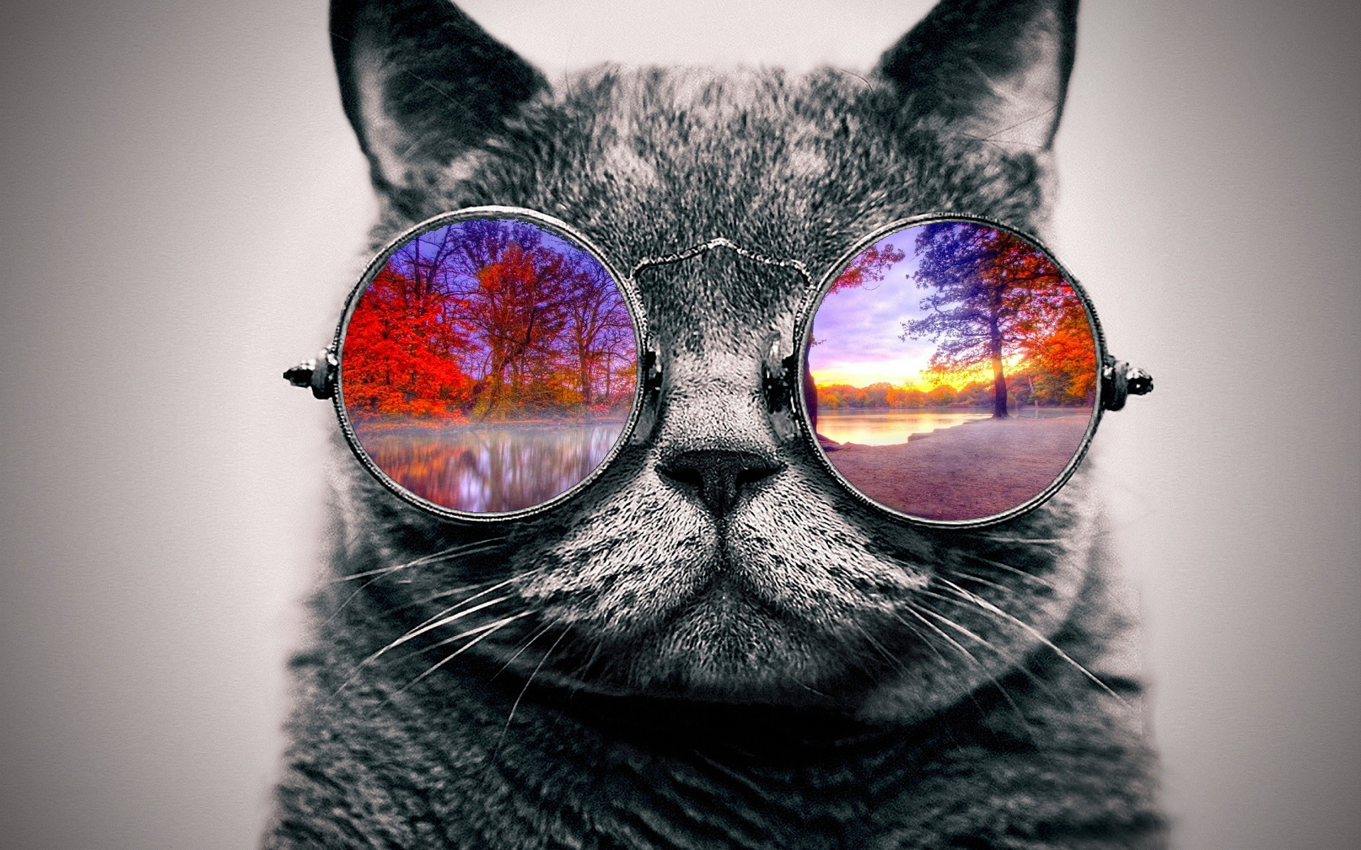 Trippy Cat Wallpapers 63 Images