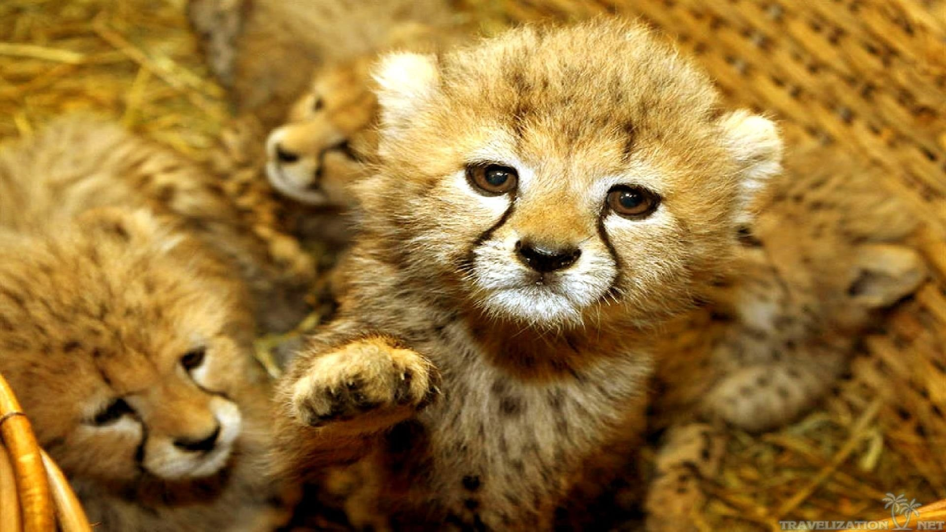 Spring Baby Animals Desktop Wallpapers 48 Images