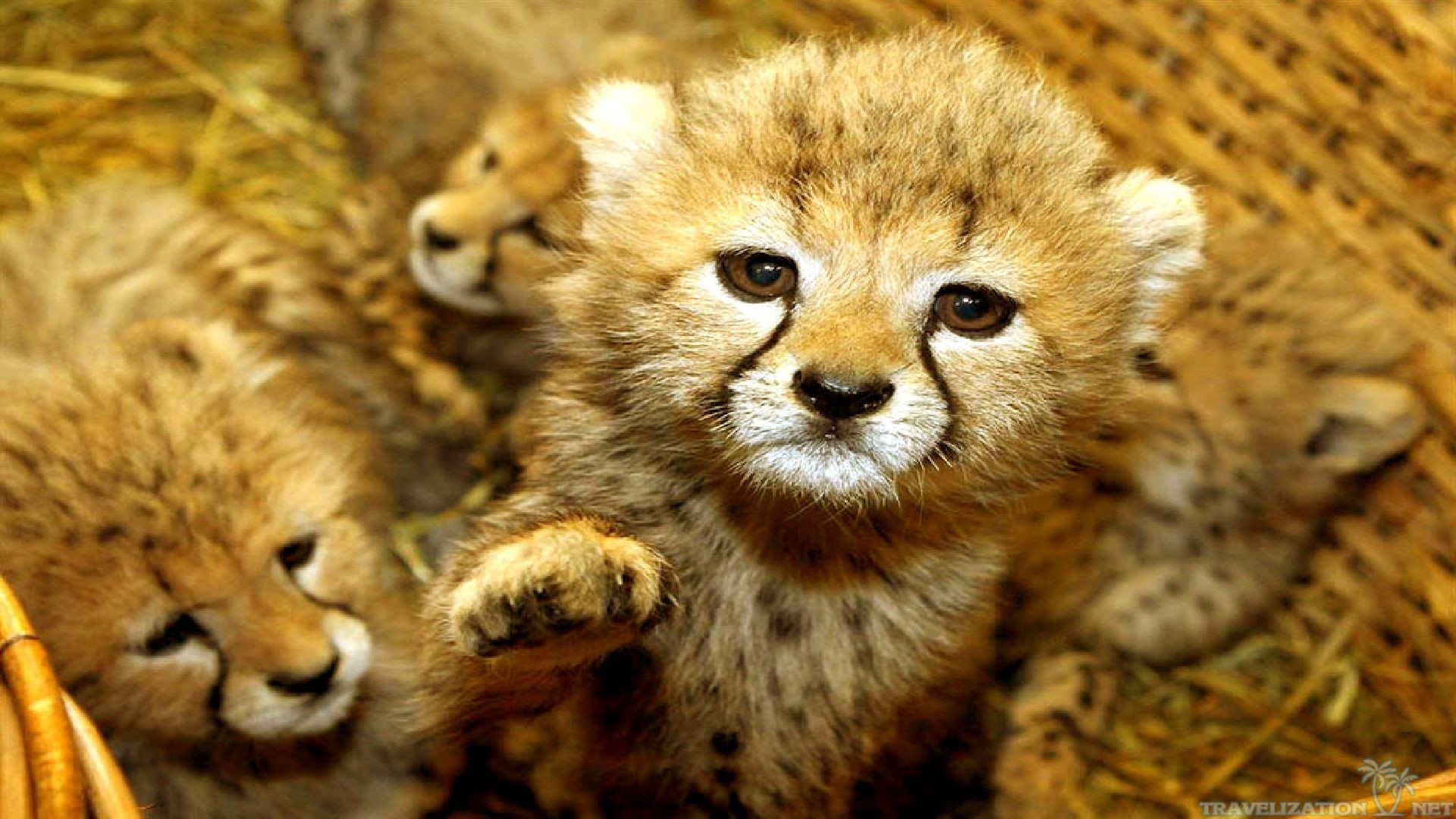 Cute Baby Animals Wallpapers 61 Images