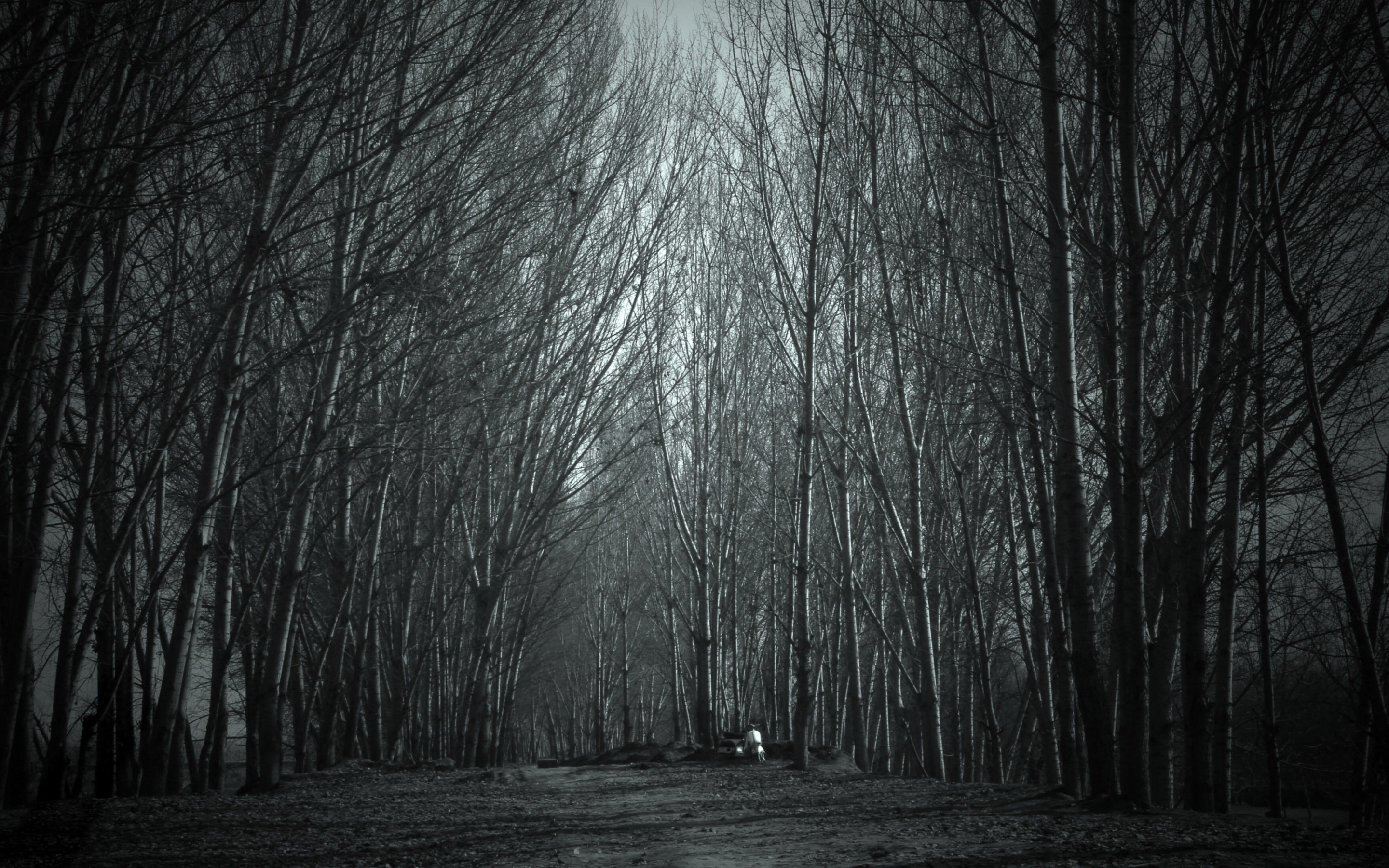 Scary Forest Background Hd