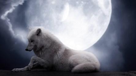 wolf moon lie predator preview