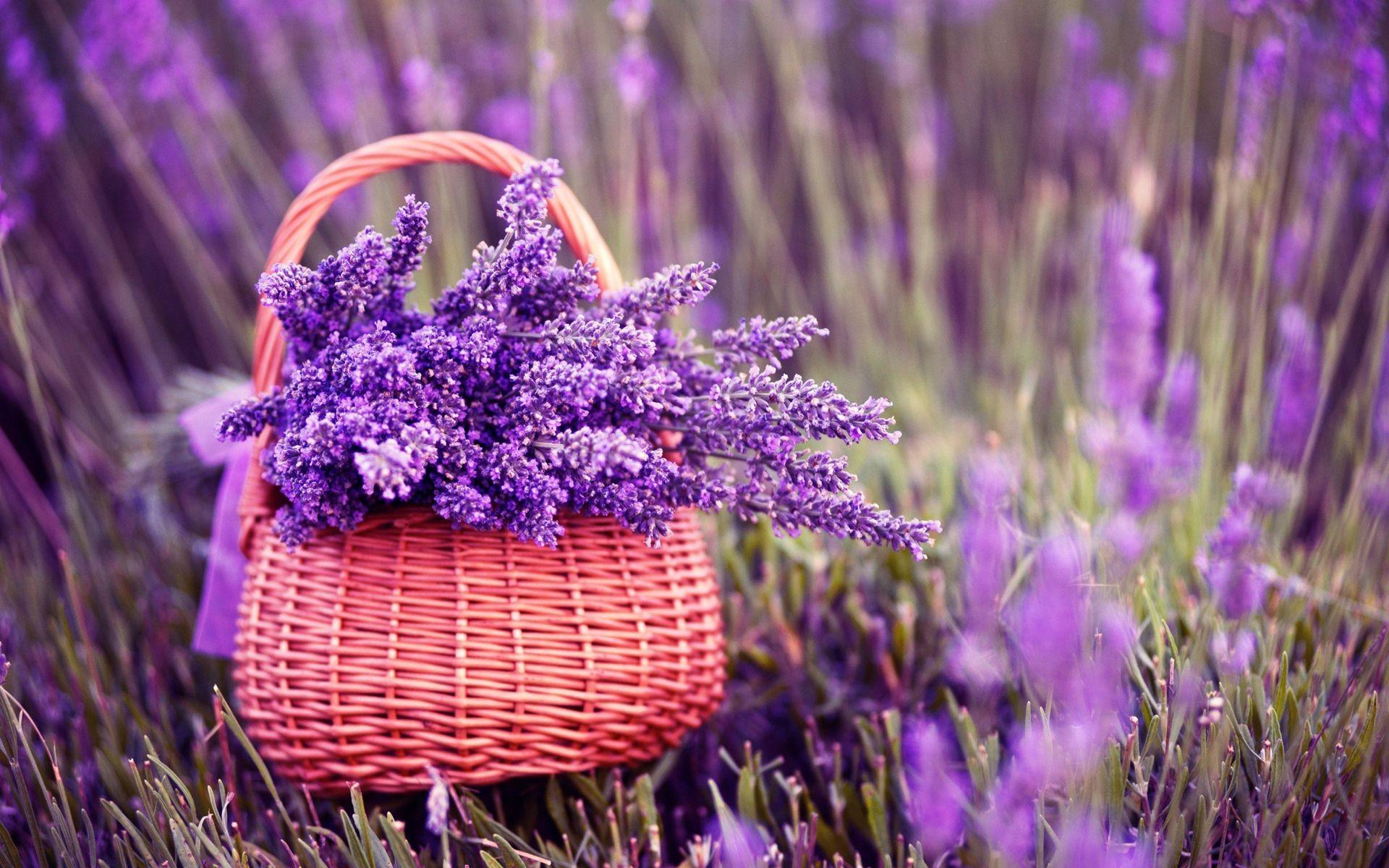 Supreme Wallpaper Iphone X Lavender Background 43 Images
