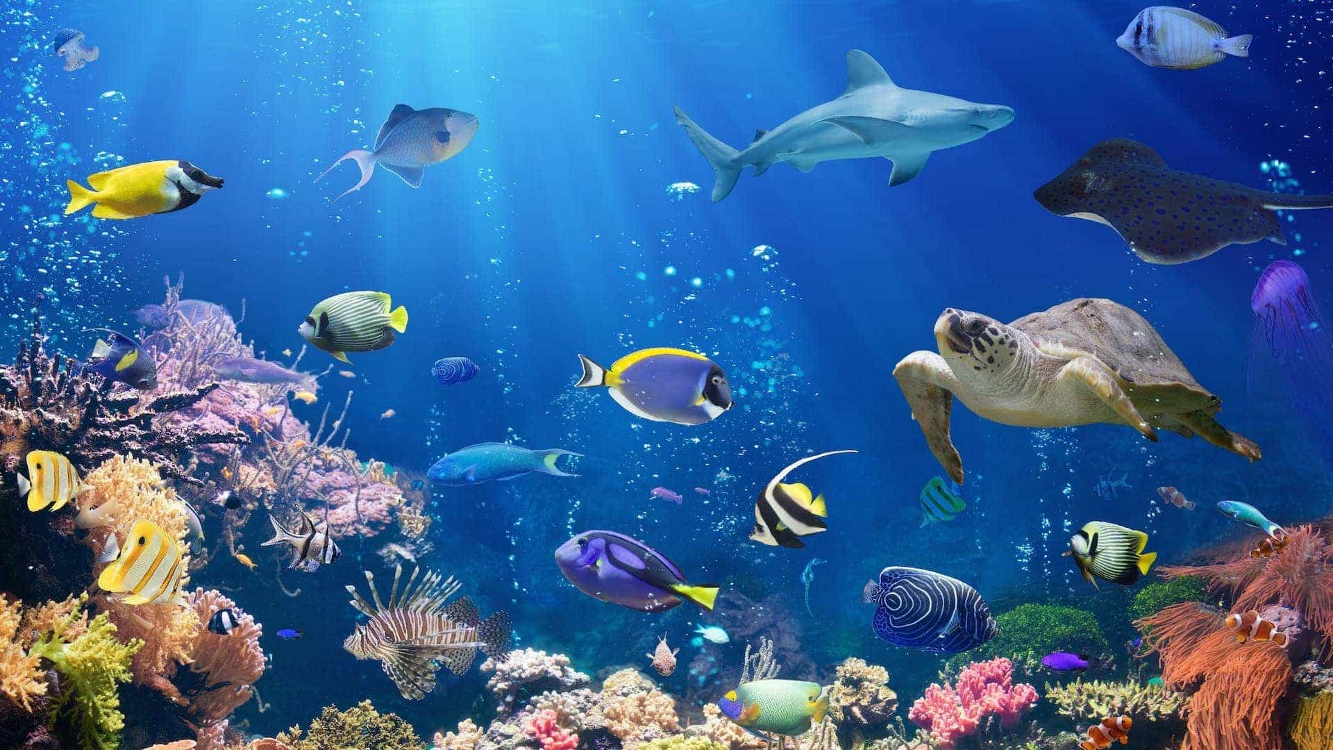 Supreme Wallpaper Iphone 5 Great Barrier Reef Wallpaper 61 Images