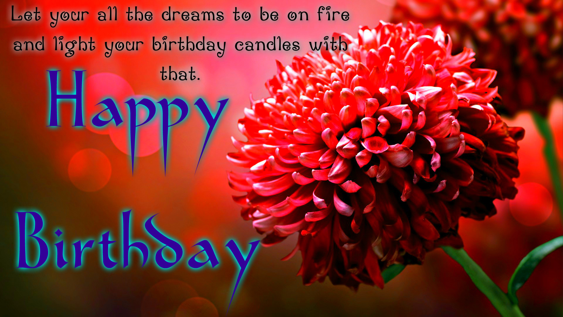 Funny Happy Birthday Wallpaper 61 Images