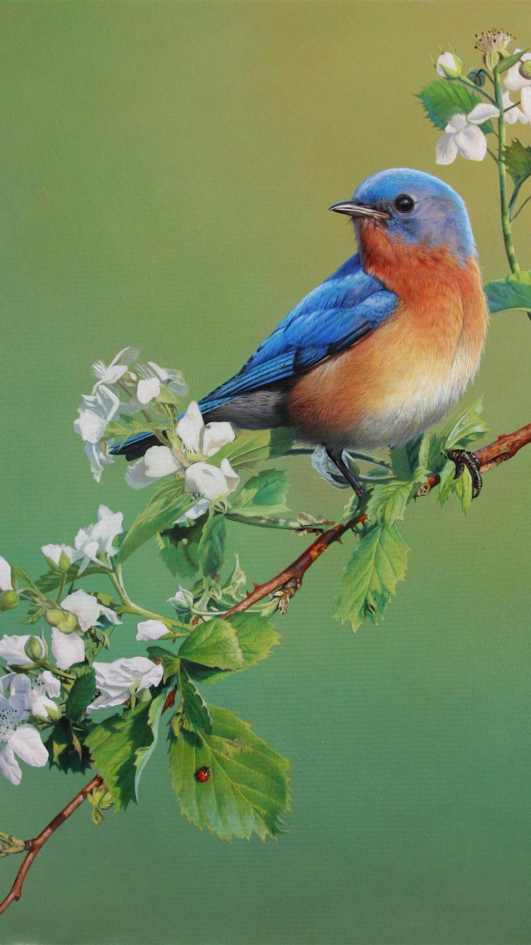blue bird wallpaper 68