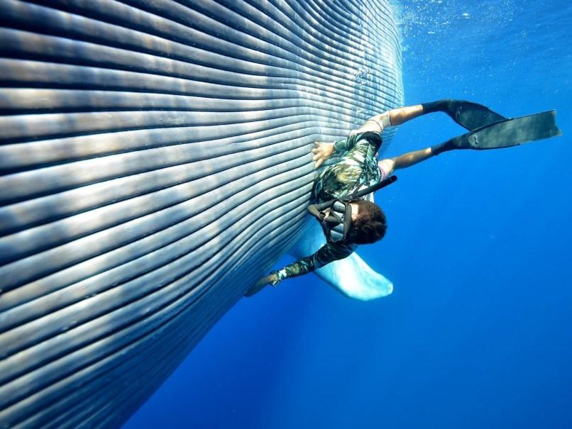 Whale Wallpaper Hd S8 Wallpaper Download