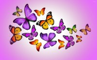 Pink and Purple Butterfly Wallpaper (65+ images)