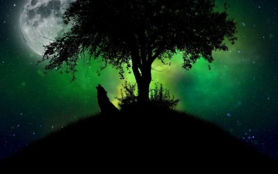 wolf howling hd moon wallpapers 3d aurora android phone backgrounds desktop wallpaperaccess pixelstalk analytics moving app mobile data getwallpapers wallpapertag