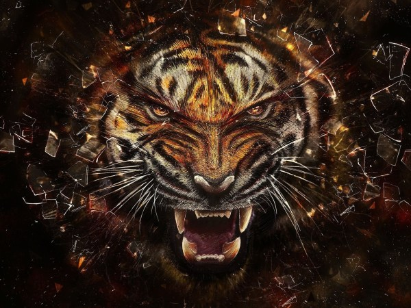 Cool Wallpapers Of Tigers 54