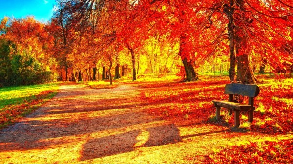 hd fall colours wallpapers 48