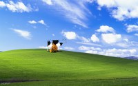 Funny Windows Backgrounds (56+ images)