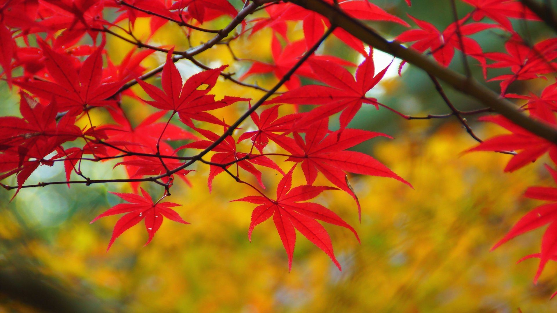 Fall Wallpaper And Screensavers For Free Fall Pumpkin Wallpaper And Screensavers 63 Images