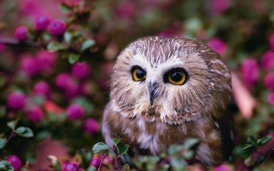 owl cute wallpapers samsung