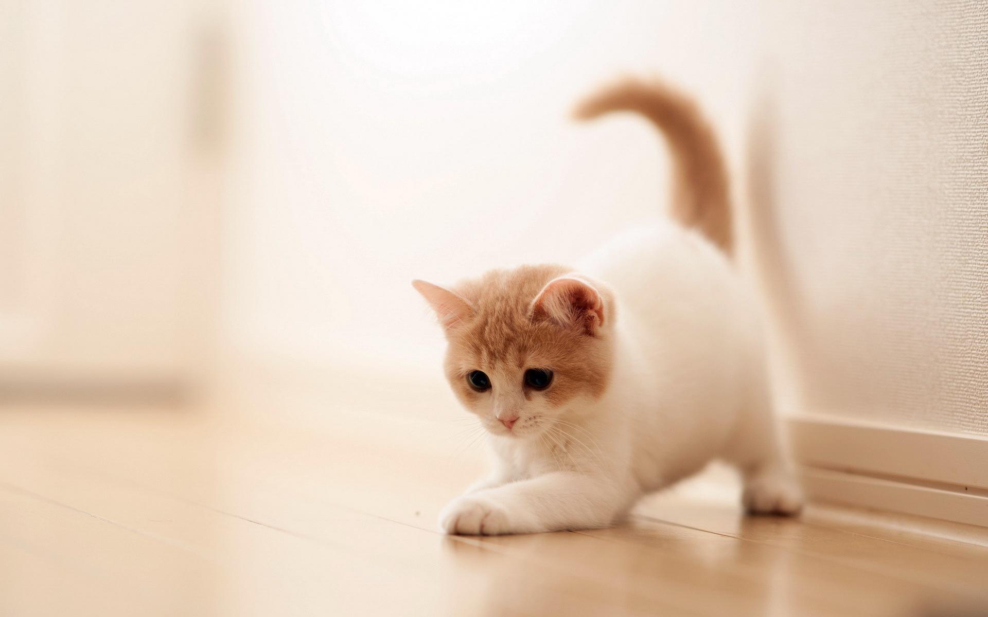 cat screensavers and wallpaper