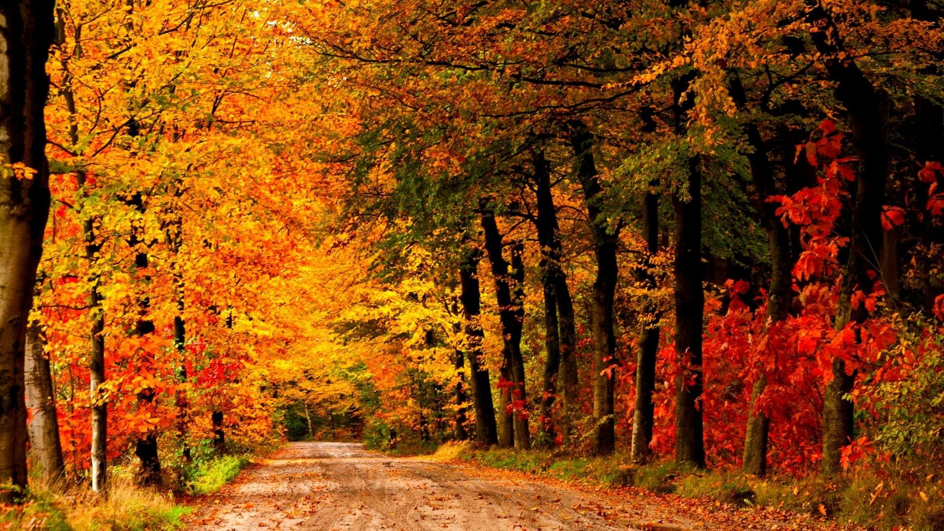 Fall Leaves Live Wallpaper Iphone Autumn Landscape Wallpaper 69 Images