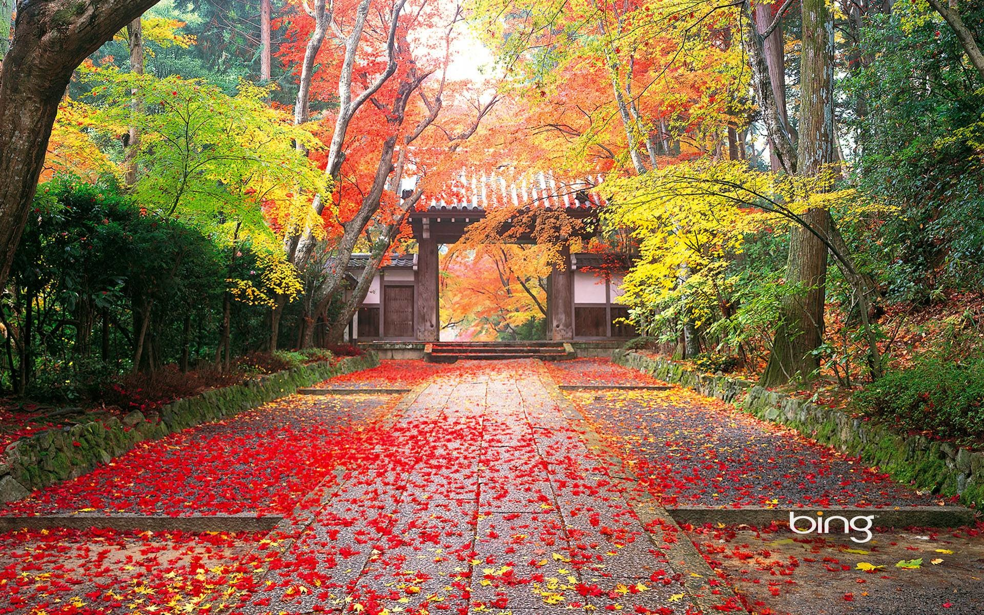 Fall Textures Wallpaper Japanese Nature Wallpaper 46 Images