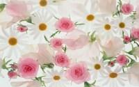 Beautiful Flowers Wallpaper (60+ images)
