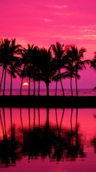 girly iphone wallpapers pretty pink palm trees plus