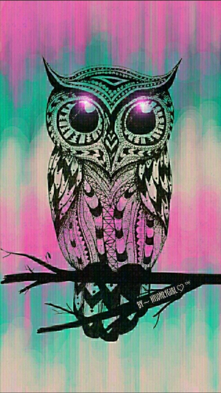 Cute Owl Wallpaper 66 Images