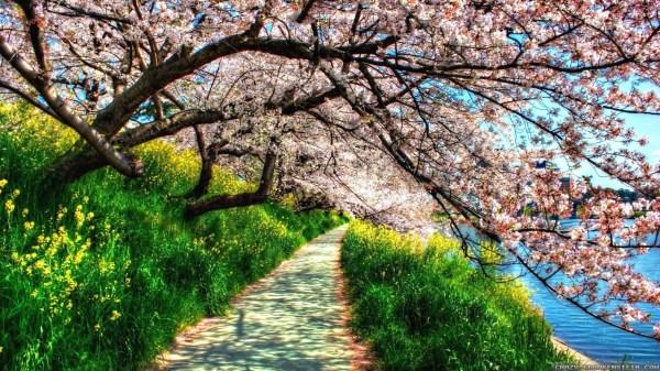 Nature Wallpaper Spring Blossoms