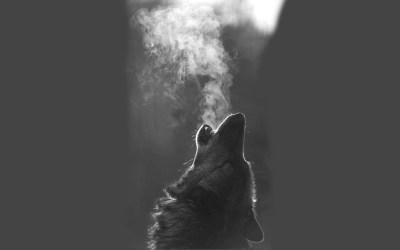 wolf howling wolves hd wallpapers breath moon animal desktop 1080 backgrounds background 1920 howl screen definition animals wallpapersafari chevron wallpaperup