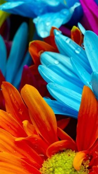 Colorful Flower Wallpapers (77+ images)