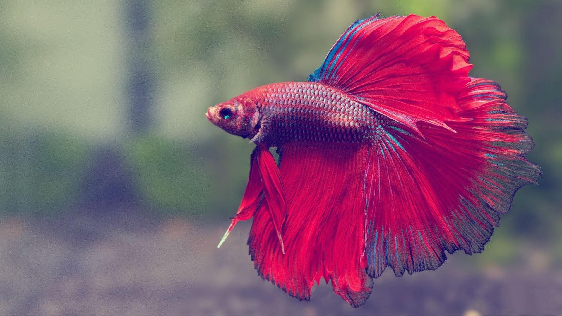 Animated Fish Tank Wallpaper Aquarium Live Wallpaper Windows 10 55 Images