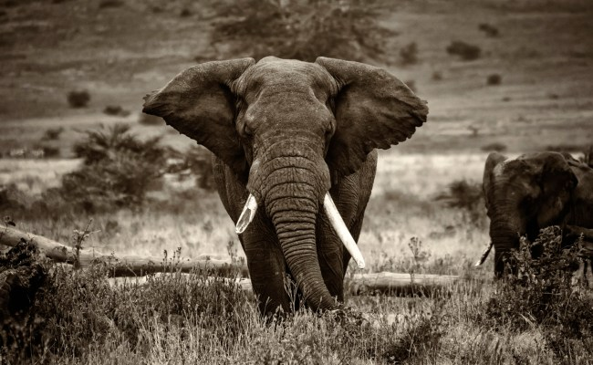 Elephant Screensavers And Wallpaper 69 Images