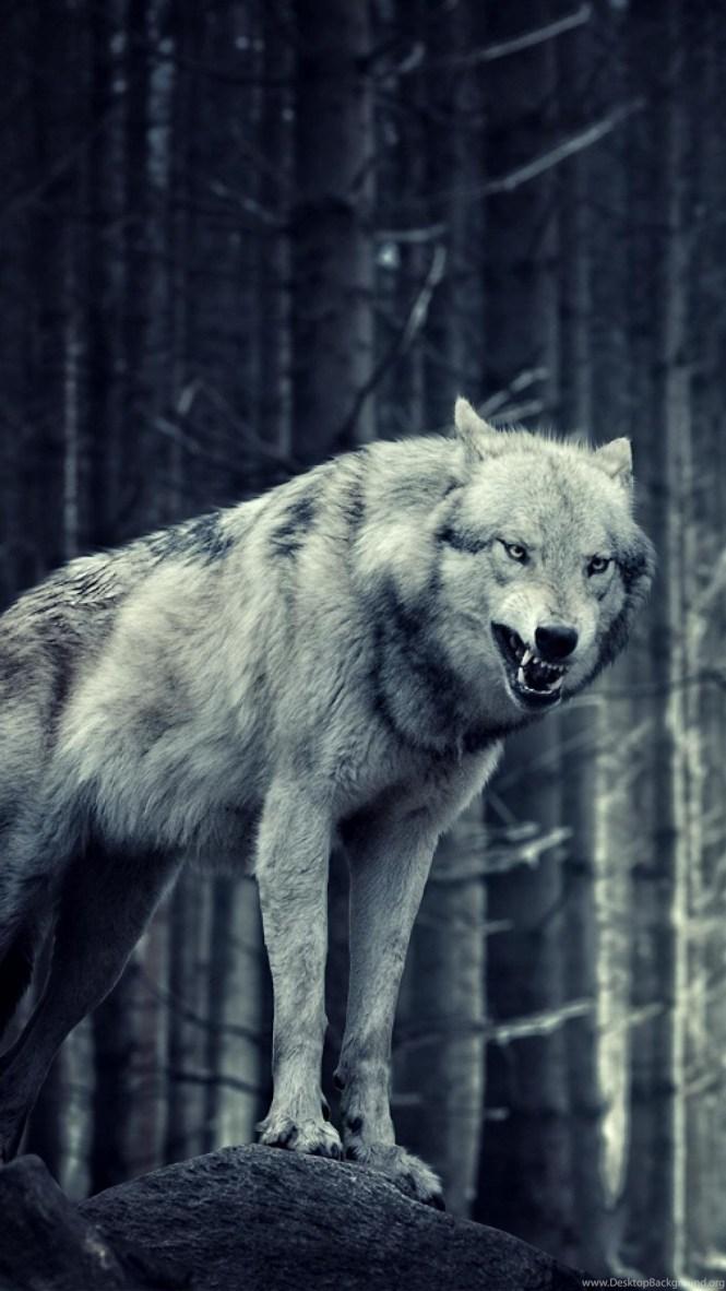 Lonewolf Wallpaper By Stoner101 On Deviantart