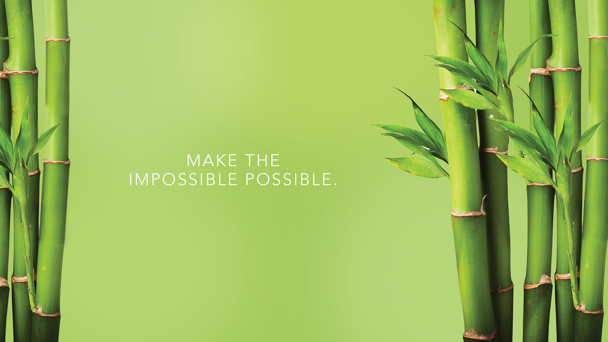 bamboo pictures wallpaper 67